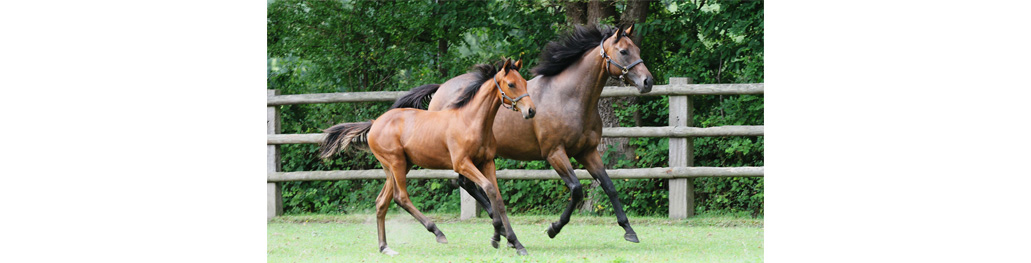 Goldikova's foal - APRH_021367_006-1