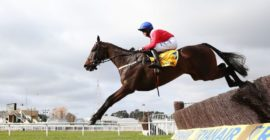 Le French-bred of the day- Allaho